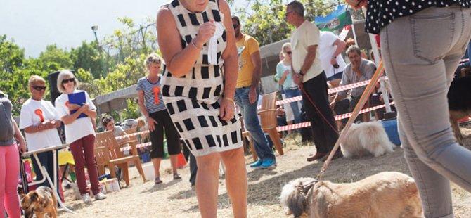 GİRNE'DE DOG SHOW
