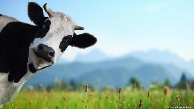 Klonlanmış hayvanın eti zararlı mı?