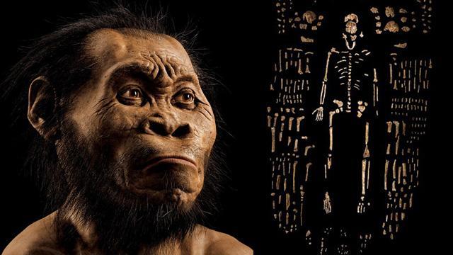 Evrim teorisi için dönüm noktası!