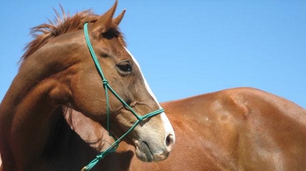 Şaka Değil At İdam Edildi!