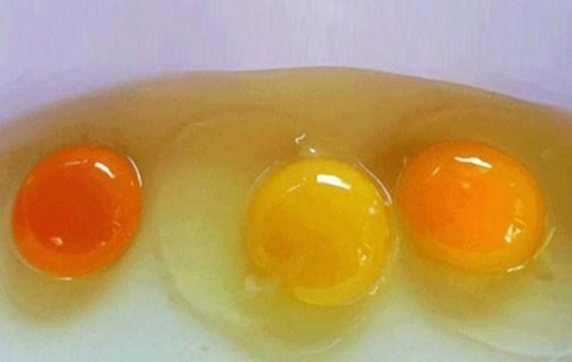 Yumurtanın Sarısı Böyleyse Dikkat!