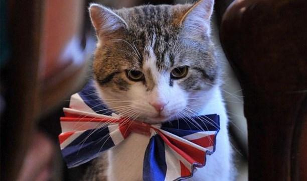 """İngiltere Dışişleri Bakanlığı'nda """"Kedi"""" Kadrosu"""