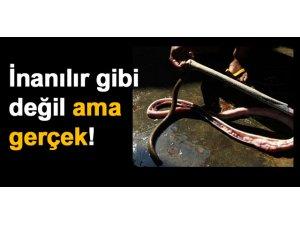 İNANILIR GİBİ DEĞİL AMA GERÇEK!