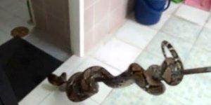 Tuvalette adamın cinsel organını...