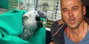 İşkence mağduru papağan öldü!