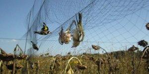 Avlanması yasak yüzlerce pulya ile yakalandı