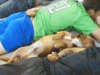 Polise Teslim Olan Köpek Ünlü Oldu