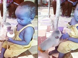 Maymun ve Çocuğun Süt Mücadelesi