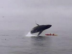 Kanodaki çiftin üzerine balina düştü